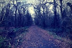The Black Lady Of Bradley Woods, Lincolnshire: On Christmas Eve, people who shout 'Black Lady, Black Lady, I've stolen your baby' three times in Bradley Woods may see the Black Lady appear to them to take back her child. Read the story here... Bradley Wood, Paranormal Stories, Its Christmas Eve, Play The Video, Wars Of The Roses, Black Lady, Scary Places, Facebook Likes, Take Back