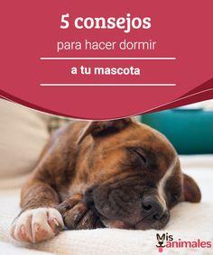 5 consejos para hacer dormir a tu mascota   Cuando por fin consigues conciliar el sueño, empiezas a escuchar unas pequeñas patitas que andan sobre el suelo. ¿Cómo hacer dormir a tu mascota? #dormir #mascota #sueño #consejos