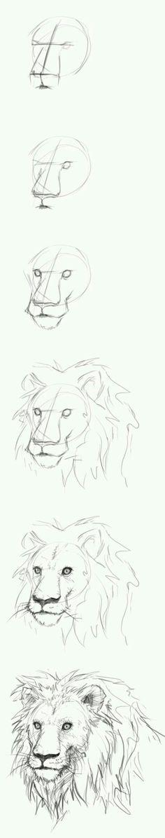 Draw a lion
