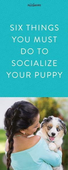 Puppy Training: Make sure puppy playtime is always happy with these socialization tips. Puppy Training Tips, Training Your Dog, Training Quotes, Leash Training, Agility Training, Dog Agility, Puppy Care, Dog Care, Puppies Tips