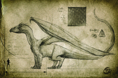 ArtStation - Draconic old manuscripts, Charidimos Bitsakakis Mythical Creatures Art, Fantasy Creatures, Dragon Anatomy, Dungeons And Dragons Classes, Dragon Artwork, Dragon Drawings, Dragon Sketch, Curious Creatures, Creature Concept