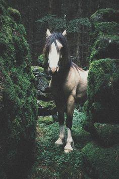 www.pegasebuzz.com | Equestrian photography : Stian Lothe.