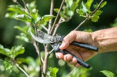 Top Five Benefits Of Tree Trimming Did you always underestimate tree pruning as an unwanted or not mandatory activity? Garden Tools, Lawn And Landscape, Garden Maintenance, Tree Trimming, Tree Pruning, Tree Garden Design, Tree Care, Shrubs, Home Vegetable Garden