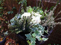 Winter hanging basket