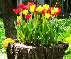 recycling tree-stump for planter and decorating with flowers - What to do with a tree stump in yard