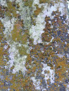 Lichen on a gravestone