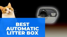 Best Automatic Litter Box Automatic Litter Box, Cleaning Litter Box, Cat Traps, Lots Of Cats, Cool Cats, Boxes, Kitty, Pets, Top