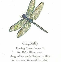 dragonfly meaning quotes Dragonfly Meaning, Dragonfly Quotes, Dragonfly Tattoo, Beatrice Baudelaire, Shattered Heart, Meant To Be Quotes, Card Sentiments, A Series Of Unfortunate Events, Fantasy Story
