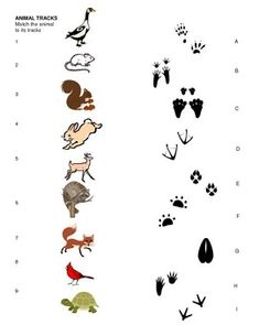 Animal Tracks Matching Sheet for pre-k, kindergarten, Art Activities, Toddler Activities, Cub Scouts Wolf, Bushcraft Skills, Bushcraft Gear, Bushcraft Camping, Animal Footprints, Kindergarten, Animal Tracks