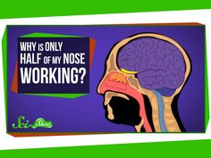 "Why Is Only Half of My Nose Working? by scishow: ""Ever notice how one side of your nose always seems to be more stuffed than the other? Quick Questions knows! Hosted by: Hank. Types Of Science, Science Articles, Daily Video, Body Systems, Hank Green, Anatomy And Physiology, One Sided, Biology, This Or That Questions"