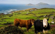 Ireland's Wild Atlantic Way: A breathtaking view across Derrynane Bay in the Ring of Kerry Best Of Ireland, Images Of Ireland, Dublin Ireland, Cork Ireland, Ireland Pictures, Ireland Vacation, Ireland Travel, Tourism Ireland, Ireland Destinations