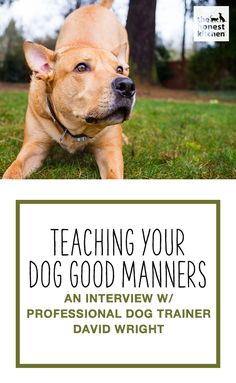 Dog Obedience Training After you teach your dog sit, down, and stay, these are perfect manners all should know - We talked to Los Angeles-based professional dog trainer David Wright to better understand what goes into raising a dog with good manners. Dog Training Methods, Basic Dog Training, Dog Training Techniques, Training Your Puppy, Training Dogs, Crate Training, Potty Training, Training Online, Training Quotes