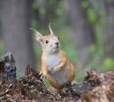 Happy Squirrel, Fox Squirrel, Baby Animals, Cute Animals, Emotional Support Animal, Racoon, Chipmunks, Woodland Animals, Animals Beautiful