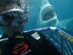 Thrill-seeking cage divers take terrifying selfies with great white sharks