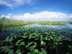 Everglades National Park : Top 16 Florida Attractions : TravelChannel.com