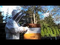 APIARY SAFETY - A quick video about how to safely perform a hive inspection by Gord Trousdell. Bee Safe, Safety, Security Guard