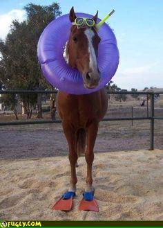 Horse at a Beach Surfing