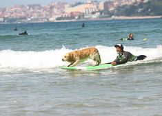 #surfcamp of Latas Surf in #cantabria #spain