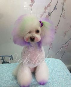 Japanese grooming dog