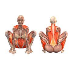 Easy crow pose - Kakasana - Yoga Poses   YOGA.com