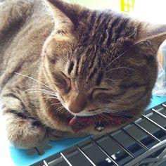 おはにゃーん❗good morning❗  #cat #catstagram #igclubcats #ilovemycat #instacat #neko #tabby #kitty #meow #world_kawaii_cat #worldcatsjournal #고양이 #ilovemycat #pets_of_our_world #ねこ #猫 #猫写真 #ネコ #きじねこ #きじとら #キジネコ #キジトラ #loves_my_cat #しましま軍団