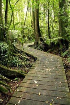 Boardwalk, New Zealand