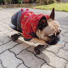 In love with the Skater Boy @bullyking_maurice #carolinacorrodi #premiumdogfashion #dogfashionwithapurpose             #hunde #traumhund #9gagcute #cutedog #hundeaufinstagram #dogtraining #swissdogs #ladbible #chien #weeklyfluff #thedodo #instachien #dogsofinstagram #swissdog #petfluencer #dogblogger #hundefotografie #hundar #dogsofinsta #zurich #geneva #hund #dogstagram #doglover #dogs  #frenchie #frenchieoftheday 9 Gag, Dog Fashion, Zurich, Geneva, Dog Training, Cute Dogs, French Bulldog, Dog Lovers, Poses