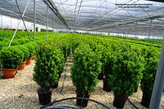 #Green everywhere, Green on the #Greenhouses #Love #Trees #Evergreen #Bushes