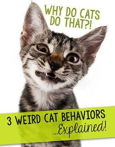 Why Do Cats Do That?! More Weird Cat Behaviors…Explained!