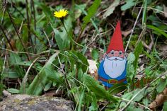 A Gnome on the road