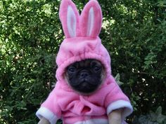 Puggy Cottontail ready for the Easter Parade,Adorable