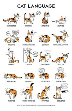Cat body language with other cats cat ears flattened sideways,cat posture meaning how to learn cat language,what does cat behavior mean what does it mean when cats ears go back. I Love Cats, Crazy Cats, Cute Cats, Funny Cats, Adorable Kittens, Cute Cat Names, 9gag Funny, Funny Laugh, Cat Body