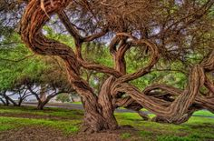 Gnarly Tree by Captain Photo on 500px