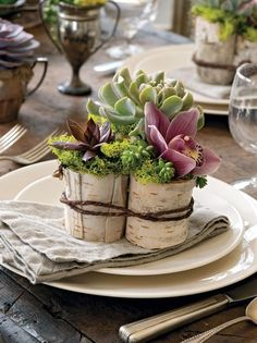 Depending on the size of your dinning table, sometimes you simply dont have room for a center piece. These individual succulent arrangements can look so chic if you can keep them simple. Adding a flower like an orchid or a rose to your arrangement than following the design rule of Three will surely make an impression on your guests.(Sedum Burriito, Echeveria Black Prince, Echeveria Dagda) photo by unknown