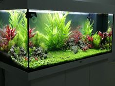 How to Create and Care for a Coral Aquarium Many aquarium owners crave to someday own a saltwater tank displaying numerous kinds of coral. Coral Aquarium, Aquarium Setup, Home Aquarium, Aquarium Design, Betta Fish Tank, Aquarium Fish Tank, Planted Aquarium, Aquarium Aquascape, Fish Tank Themes