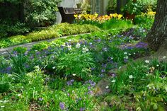 Chanticleer's Oak Bed filled with spring delights! See my visit on Wife, Mother, Gardener...