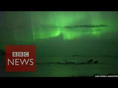 Fantastisches Video - fantastisches Erlebnis: A group of humpback whales basking under the Northern Lights has been captured on camera by Norwegian TV. The video was filmed off the coast of Kvaløya (Whal. Northern Lights Norway, See The Northern Lights, Aurora Borealis, Tromso, Underwater Room, True Lies, Tales From The Crypt, Humpback Whale, Whales