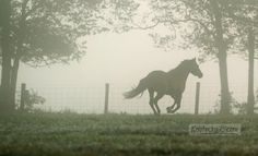 Photo Gallery: Early morning fog in Kentucky