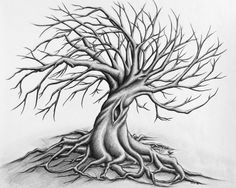 roots sketch - Google Search
