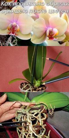 Как правильно обрезать орхидею после цветения Interior Design Living Room, Living Room Designs, Horticulture, Houseplants, Paper Flowers, Garden, Handmade, Beautiful, Decorative Garden Fencing