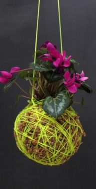 Things we won't be having - UGLY kokedama with fluro string