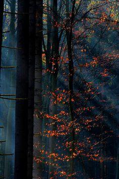 Mist in a Winter ForestByMyOakForest