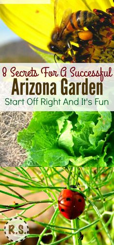 How do you garden in the scorching hot desert? What is the best way to water a desert garden? Arizona gardening may have its challenges... But you can get them right now and have a stunning garden!