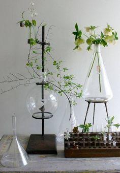 Interieur trends | Laboratorium & apothekers flessen als vazen • Stijlvol Styling - Woonblog •Stijlvol Styling – Woonblog