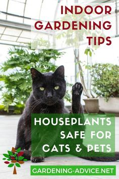 Which house plants are safe for cats? #gardening #gardeningtips #houseplants #houseplantcare #indoorgardening #plants