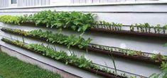 jardín vertical, muro vivo, canales de la lluvia