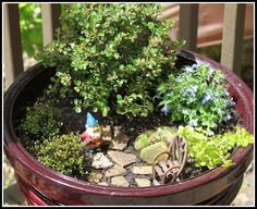 Made A Little Dish Garden For The Deck Big And Little Garden Ideas with Dish Garden Ideas Dish Garden, Herb Garden, Garden Tools, Garden Ideas, Diy Projects Small, Garden Tool Storage, Steampunk House, Grass Seed, Medicinal Herbs