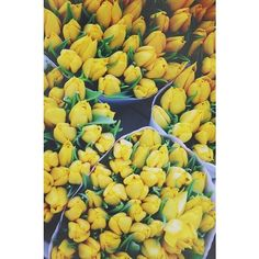 yellow summer ❤ liked on Polyvore featuring pictures, backgrounds, pics, flowers and photos