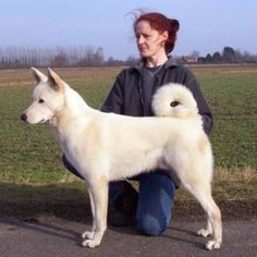 The Canaan Dog originated in the 1930s in the land of Canaan out of breedings of the wild dogs of Israel, which dated back to biblical times working as guard and herding dogs for the Israelites. Drawings of dogs which looked like the Canaan Dog were found in tombs that date back to 2200 BC.They  excel as a herder, but it has also proven itself in a variety of tasks involving dependability and obedience such as agility, tracking and herding trials