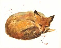 Hibernation Fox Watercolor Print